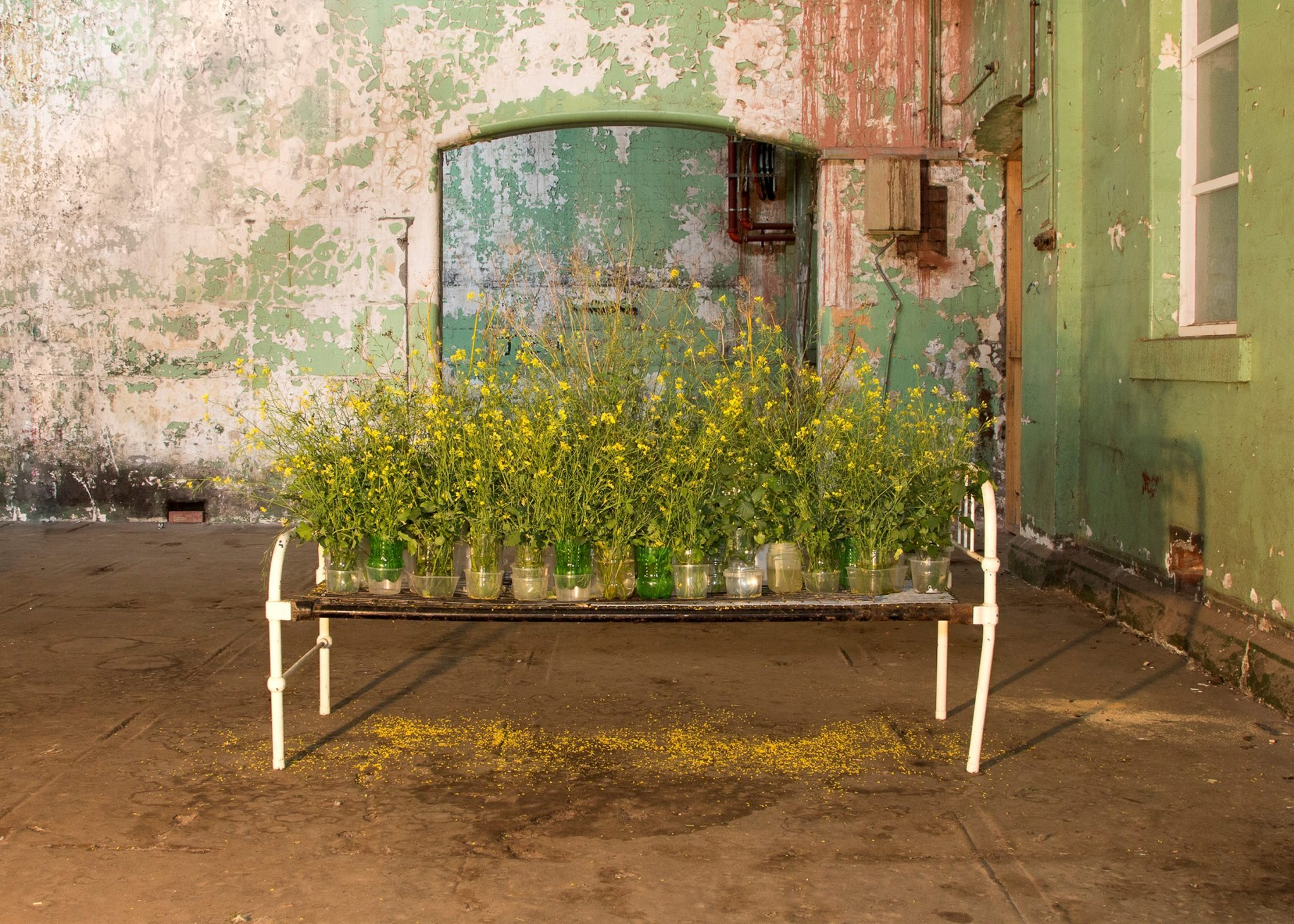 Lauren Berkowitz, 'Weeds and Wildflowers'