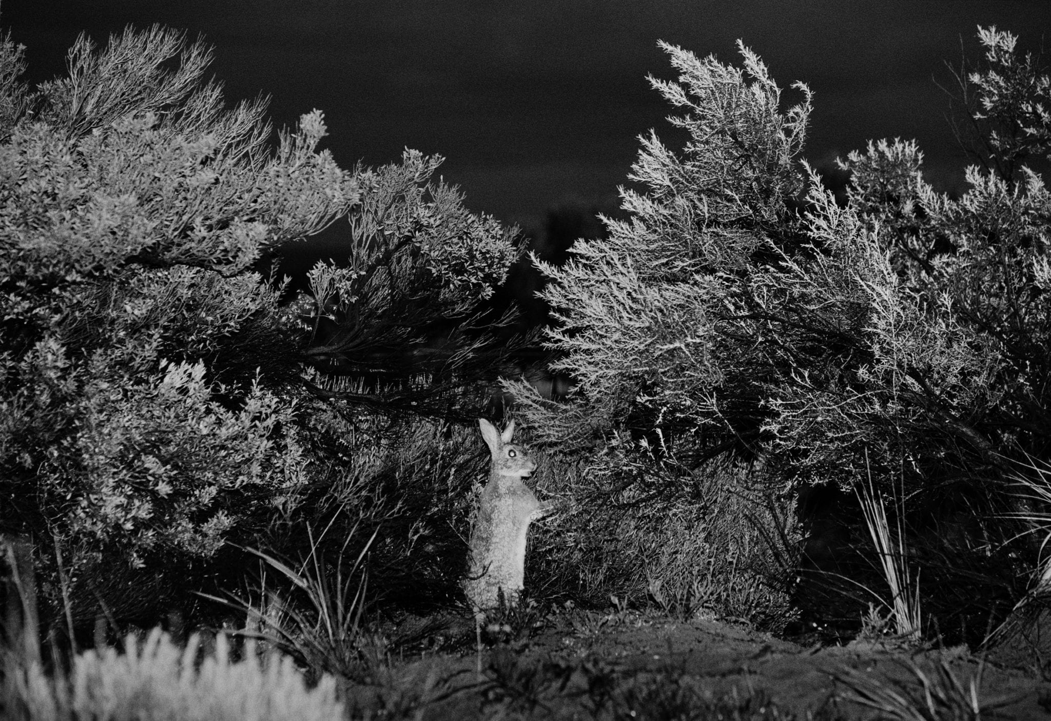 Trent Parke, Rabbit, 2010, Archival Pigment Print, 120 x 175 cm (unframed). Image courtesy of the artist and Stills Gallery, Sydney. Latrobe Regional Gallery Collection.